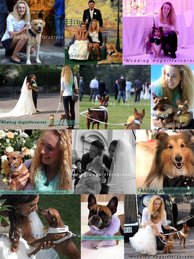 Wedding-dogsitter-varese-mix